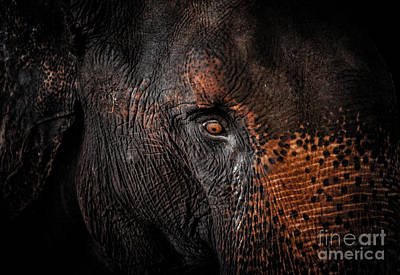 Photograph - Cry Of An Elephant  by Venura Herath