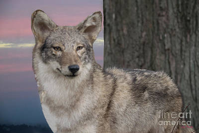 Cry Wolf Art Print by Linda Troski