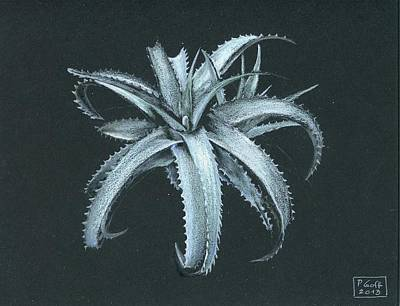 Painting - Cryptanthus Warasii by Penrith Goff