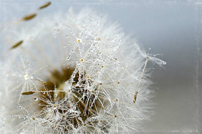 Photograph - Crystal Dew by Fraida Gutovich