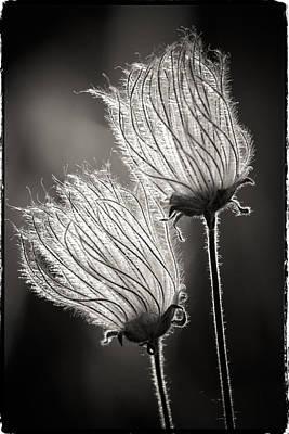 Photograph - Crystal Flowers by John McArthur
