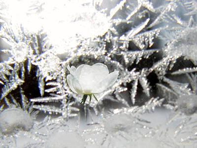 Photograph - Crystal Rose by Debra     Vatalaro