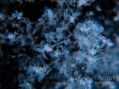 Photograph - Crystal Snowflakes by Cheryl Baxter