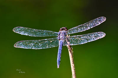 Photograph - Crystal Wings by Sandi OReilly