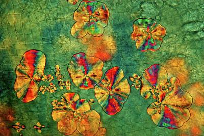 Crystals On Waterflea Art Print by Marek Mis