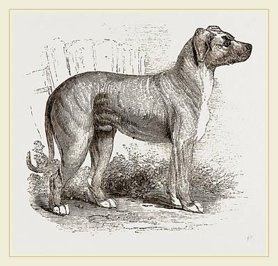 Cuban Blood-hound Art Print by Litz Collection