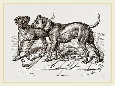 Cuban Blood-hounds Art Print by Litz Collection