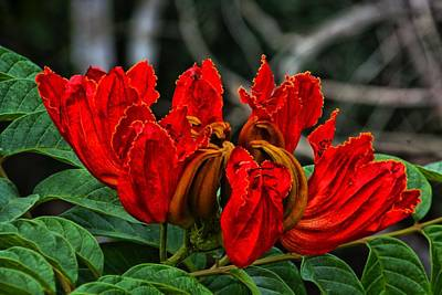 Photograph - Cuban Flower by Perry Frantzman