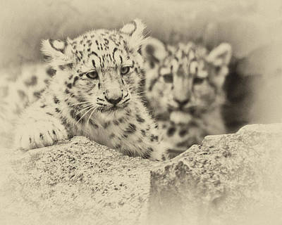Photograph - Cubs At Play by Chris Boulton