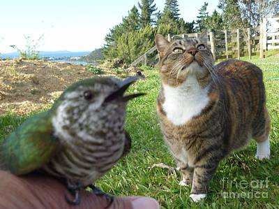 Photograph - Cuckoo And Kitty by Dianne  Connolly