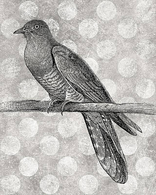 Perch Digital Art - Gray Bird by Flo Karp