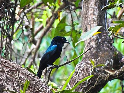 Cuckoo Original by Rakesh KR