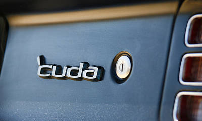 Photograph - Cuda by Morris  McClung