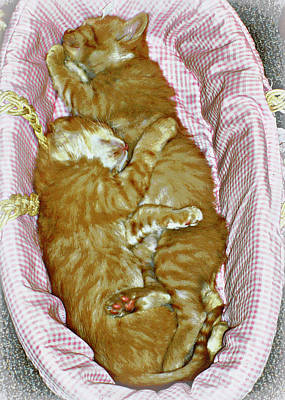Photograph - Cuddly Kittens by Heidi Manly