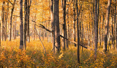 Photograph - Cuivre River State Park by Scott Rackers