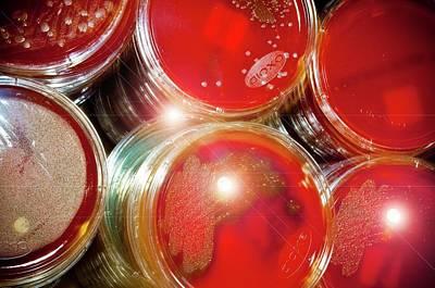 Cultures In Petri Dishes Art Print