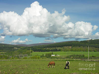 Photograph - Cumulus Clouds In June by Phil Banks
