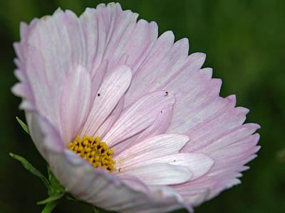 Cupcake Flower Original