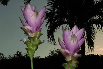 Photograph - Curcuma Hybrid Flowers by Greg Allore
