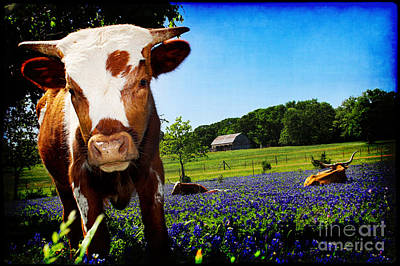 Longhorn Bluebonnet Photograph - Curiosity Becomes Him by Katya Horner
