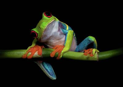 Frogs Photograph - Curiosity by Ferdinando Valverde