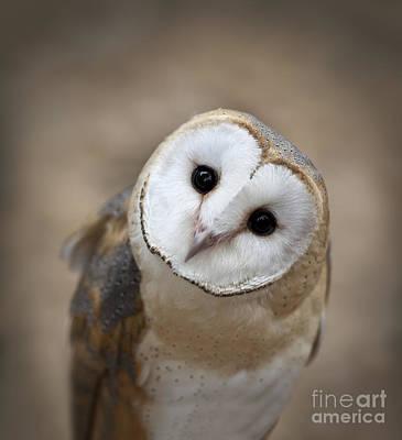 Barn Owl Photograph - Curious Barn Owl Closeup Portrait by Brandon Alms