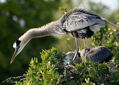 Rowing - Curious Blue Heron by Patricia Twardzik