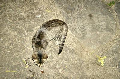 Curious Cat And Acorn Art Print