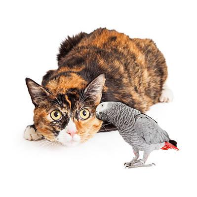 Curious Cat Looking At Bird Print by Susan Schmitz