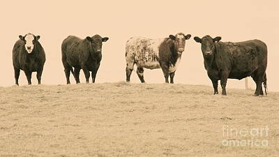 Photograph - Curious Cows by Suzanne Oesterling