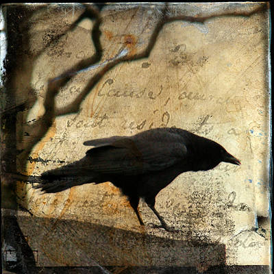 Curious Crow Print by Gothicrow Images
