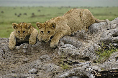 Photograph - Curious Cubbies by Michele Burgess