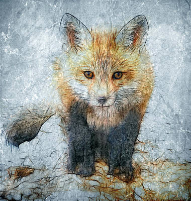 Curious Fox Art Print by Steve Barge