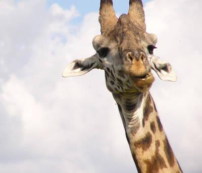 Curious Giraffe Art Print