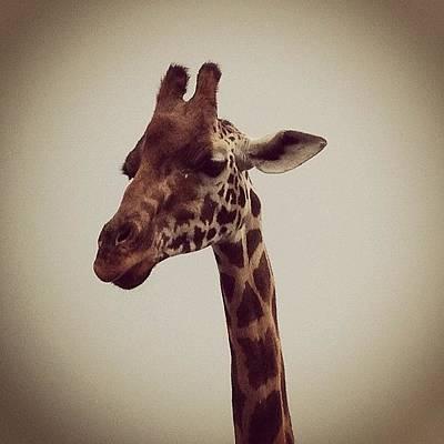 Cow Photograph - Curious Giraffe by Michael Gonzalez
