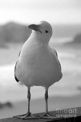 Photograph - Curious Gull by Chris Scroggins