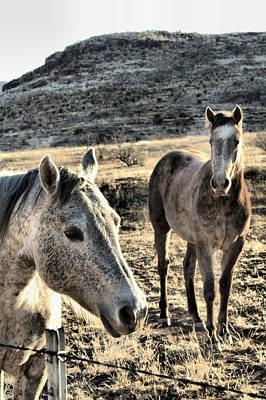 Curious Horses Art Print