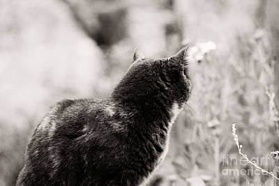 Black And White Photograph - Curious Kitty by Erin Johnson