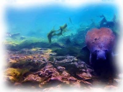 Photograph - Curious Manatee 1 by Sheri McLeroy