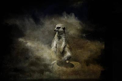 Curious Meercat Art Print