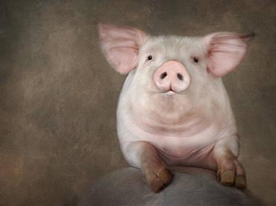 Pig Digital Art - Curious Pig by Lori Deiter