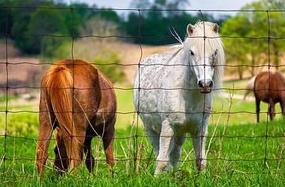 Farm Photograph - Curious Pony by Steve Harrington