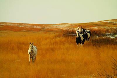 Curious Ponys  Art Print by Jeff Swan