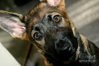 Best Friend Photograph - Curious Puppy by Micah May