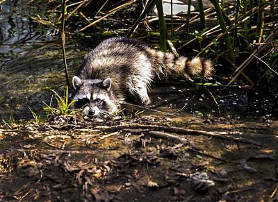 Photograph - Curious Rocky By Denise Dube by Denise Dube