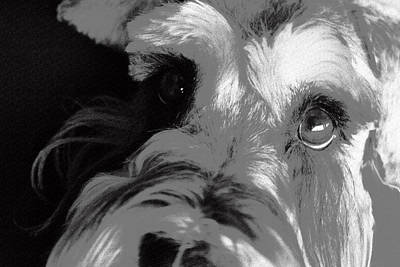 Farm Life Paintings Rob Moline Royalty Free Images - Curious Schnauzer Royalty-Free Image by Jan Garcia