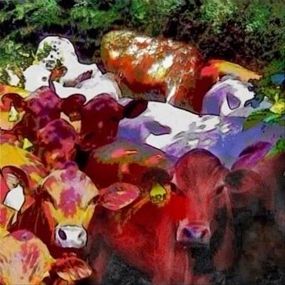 Painting - Curious Senepol Cattle - Square by Lyn Voytershark
