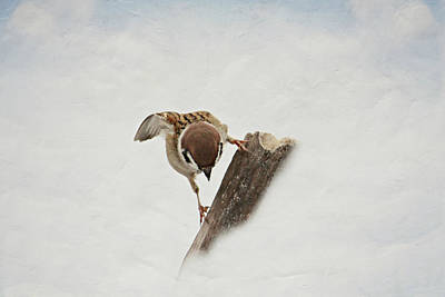 Animales Photograph - Curious Sparrow by Heike Hultsch