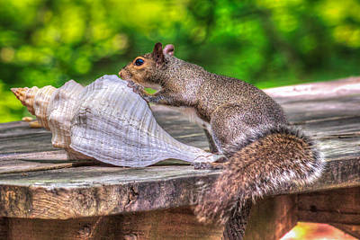 Print featuring the photograph Curious Squirrel by Rob Sellers