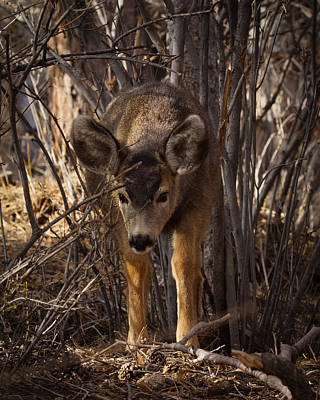 Photograph - Curious Youngster 2 by Ernie Echols